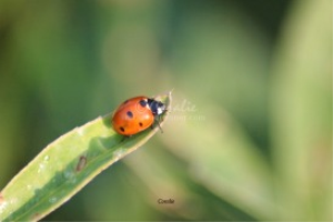 Colorful Ladybug | Photos and Images | Animals