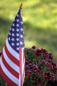 American Flag and Flowers | Photos and Images | Botanical