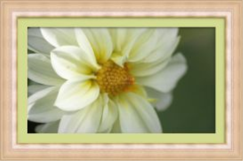 First Additional product image for - White Yellow Dahlia Flower
