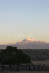 mt jefferson at the old corral at sunrise | Photos and Images | Travel