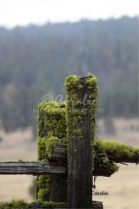 Ochoco Mountains Old Livestock Corral | Photos and Images | Agriculture
