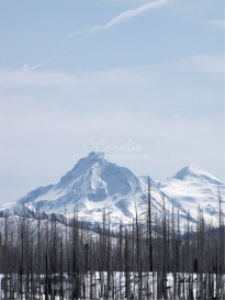 Snow Covered Cascade Mountains Oregon | Photos and Images | Nature