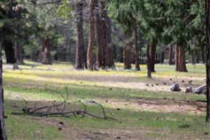 Campground Along The Metolius River | Photos and Images | Travel
