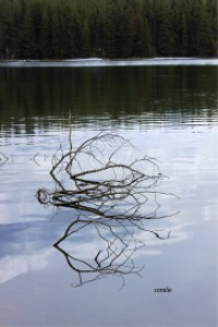 Branches In The Icey Lake | Photos and Images | Nature