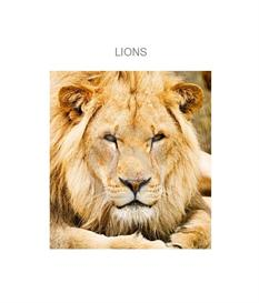 Lions | eBooks | Education