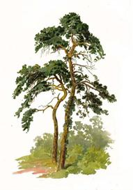 Trees and Hot To Paint Them In Watercolours | eBooks | Arts and Crafts