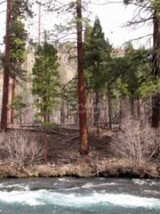 Metolius River Oregon 2 | Photos and Images | Travel