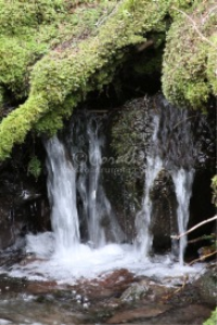 Cascades Falling In The Cascade Mountains | Photos and Images | Nature