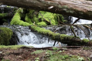 Cascades Falling Under A Log | Photos and Images | Nature