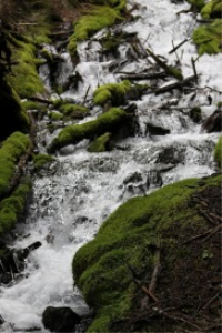 Cascades Falling In Oregon | Photos and Images | Nature