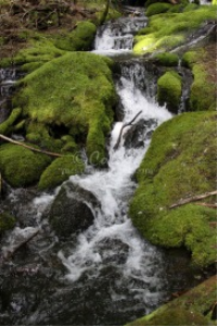 water scene in the cascade mountains