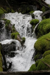 cascades creek | Photos and Images | Nature