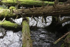 Log Jam Cascade Mountains | Photos and Images | Nature