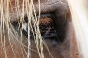 Eye of a Horse | Photos and Images | Animals