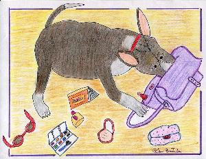 amicable dogs color digital album 1