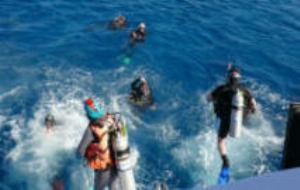 resort scuba diver new