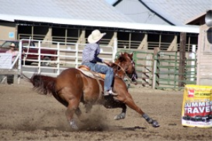 barrel horse in action