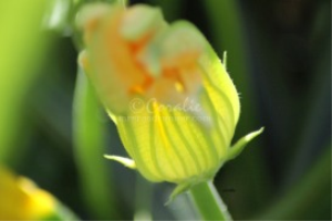 Captured The Light | Photos and Images | Botanical