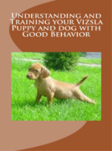 understanding and training your vizsla puppy and dog with good behavior