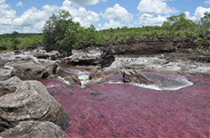 Caño Cristales | Photos and Images | Nature