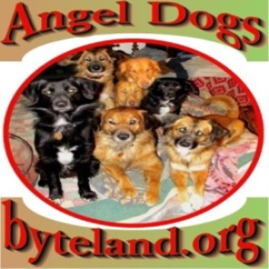 angel dogs of byteland.org