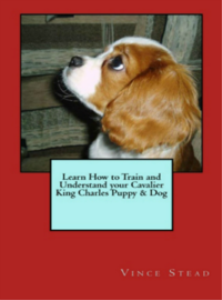 learn how to train and understand your cavalier king charles puppy & dog