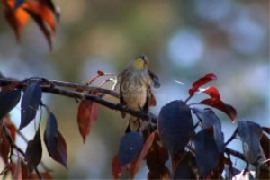 yellow rumped warbler 9 | Photos and Images | Animals