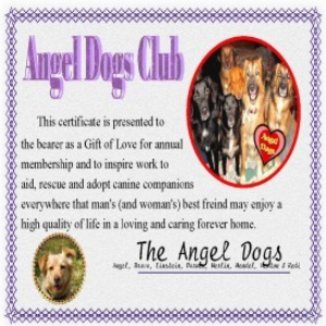 angel dogs club membership certificate