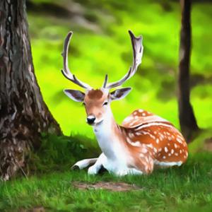 white tailed deer digital painting