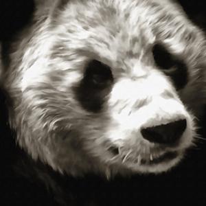 panda bear digital painting