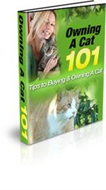 owning a cat 101 with master resale rights