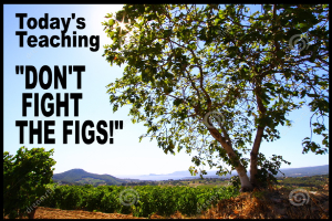 Don'T Fight The Figs | Audio Books | Religion and Spirituality