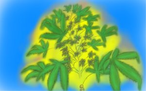 cannabis bush - blue and yellow
