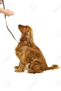 Dog Training   Other Files   Everything Else