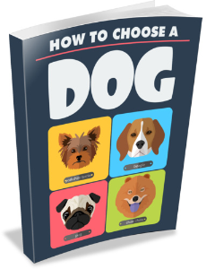 how to choose a dog