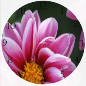 pink dahlia flower clock template