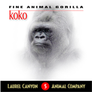 Koko - Fine Animal Gorilla (Album) | Music | Other