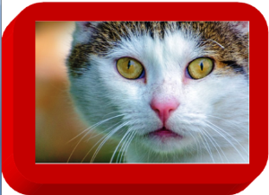 best cat eyes
