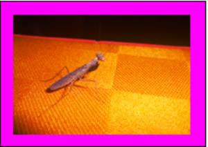 Praying mantis | Photos and Images | Animals