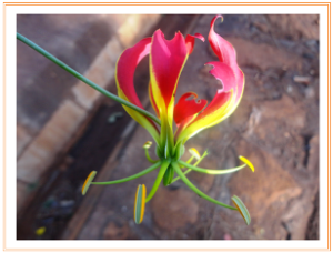 Weed flower | Photos and Images | Botanical