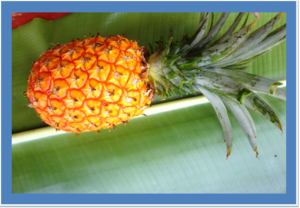 Ripe pinnaple | Photos and Images | Agriculture