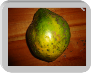 Paw paw | Photos and Images | Agriculture