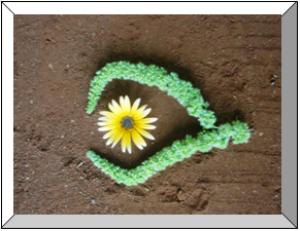 Eye of Daisy and amaranth | Photos and Images | Botanical