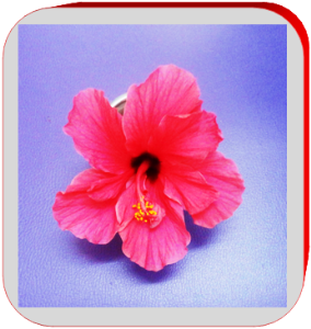 Hibiscus flower | Photos and Images | Botanical