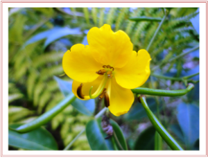 Wild plant flower | Photos and Images | Botanical