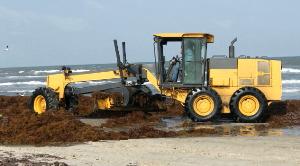 seaweed removal