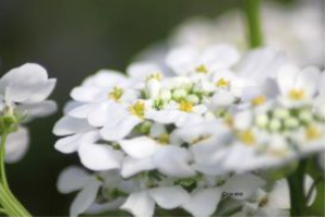 Flowers of White | Photos and Images | Botanical