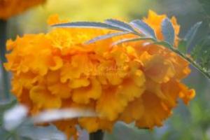 yellow Orange flower bloom | Photos and Images | Botanical