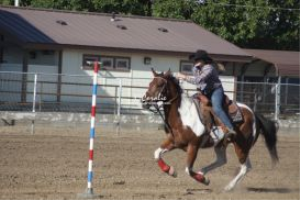 Sporting Color Horse and Rider | Photos and Images | Sports