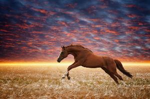 Horse Whisperer Healing | Movies and Videos | Religion and Spirituality